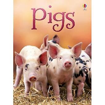 Schweine (Anfänger)