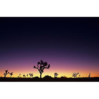 California Mojave ørkenen Joshua Tree National Park Joshua Trees silhuett på Dawn PosterPrint