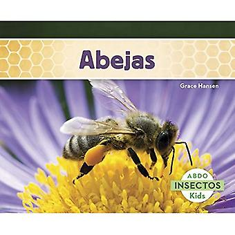Abejas (Insectos)