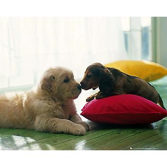 Puppy Kiss poster small-format