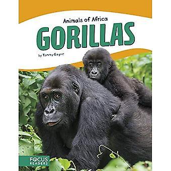 Animaux d'Afrique: gorilles