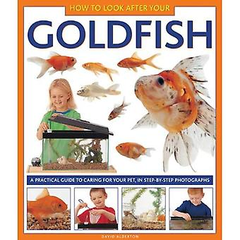 How to Look After Your Goldfish