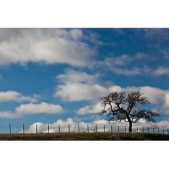 Tree and fence on a landscape Santa Barbara Wine Country Santa Ynez Santa Barbara County California USA Poster Print