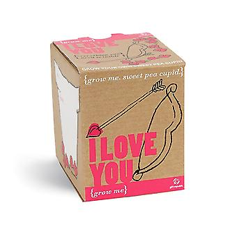 Pflanz Set Süsserbse I love you Samen 4-teilig Grow me Box