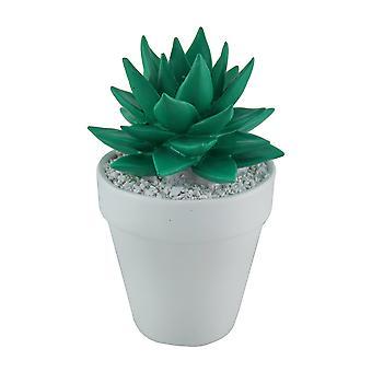 白い丸いプランターに明るい緑のミニ セラミック多肉植物