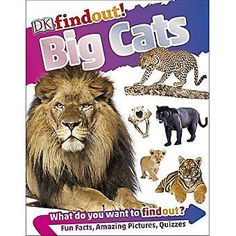 DKfindout! Stora katter (DKfindout!)