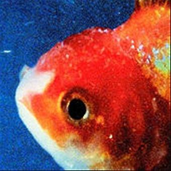 Vince Staples - Big Fish Theory [CD] USA import