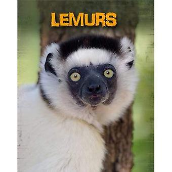 Os lémures (vivem no estado selvagem: primatas)