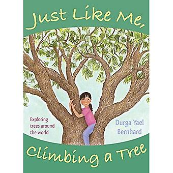 Just Like Me, Climbing a Tree: Exploring Trees Around the World