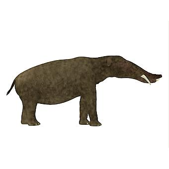 Platybelodon mammal side view Platybelodon was a herbivorous extinct mammal related to the elephant that lived in Miocene Era in Africa Europe Asia and North America Poster Print