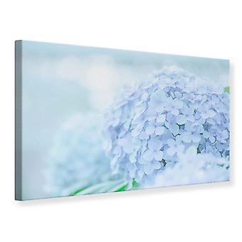 Canvas Print de hortensia
