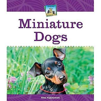 Miniature Dogs (Sandcastle: Mini Animal Marvels)