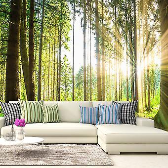 Wallpaper - cuentos del bosque