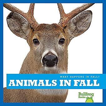 Animals in Fall (What Happens in Fall?)
