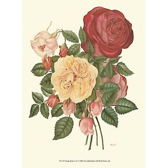 Vintage Roses I Poster Print by Vision studio (10 x 13)