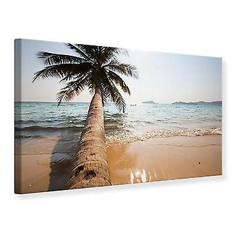 Canvas Print Palm