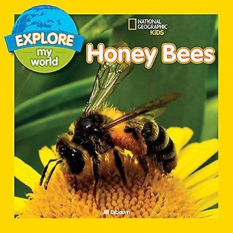 Entdecken Sie meine Welt: Honig-Bienen
