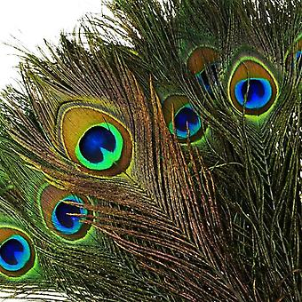 Peacock Feathers  | For Weddings Decoration DYI Creative Projects Valentin Carnival Halloween | Pack of 100