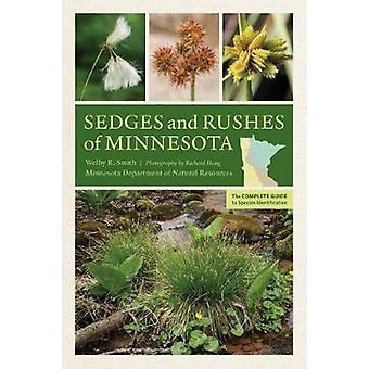Sedges and Rushes of Minnesota - The Complete Guide to Species Identif