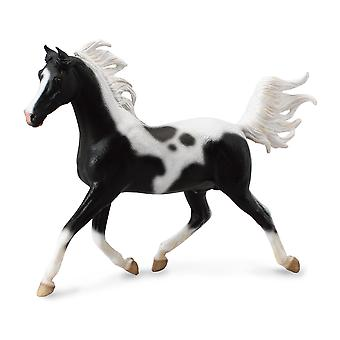 CollectA 1:12 halv Araber Stallion? Pinto