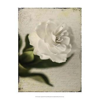 Gardenia Grunge II Poster Print by Honey Malek (13 x 19)