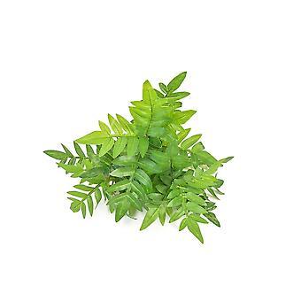 Artificial Green Wall System - Amoora UV