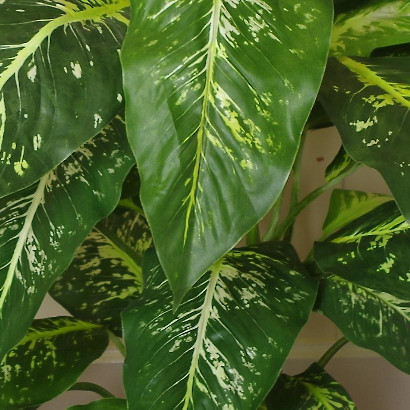 100cm Large Foxs Aglaonema (Spotted Evergreen) Tree Artificial Plant with Metal Planter