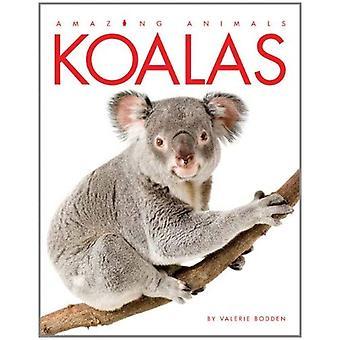 Koalas (Amazing Animals (Creative Education Paperback))