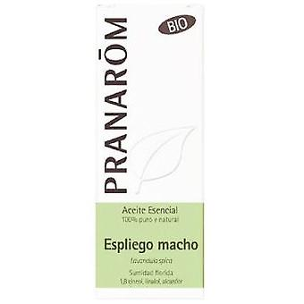 Pranarom Essential Oil Male Espliego