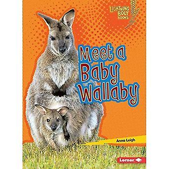 Meet a Baby Wallaby (Lightning Bolt Books Baby Australian Animals)