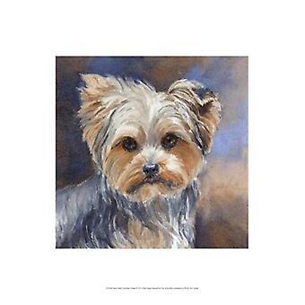 Sadie Belle Yorkshire Terrier affisch Skriv av Edie Fagan (13 x 19)