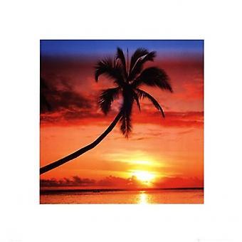 Sunset - Palm Tree Poster Poster afdrukken