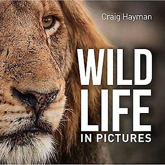 Djurlivet i bilder