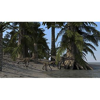 A family of Utahraptors along the shoreline Poster Print