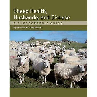 Salud de ovejas, cría y enfermedad: una guía fotográfica