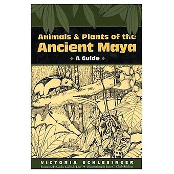 Djur och växter av forntida Maya