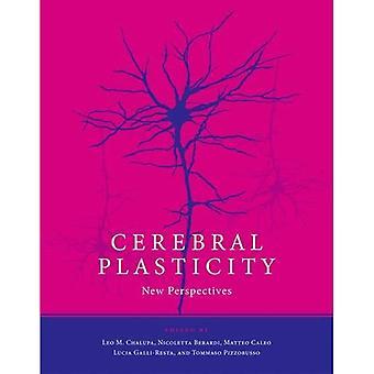 Cerebral Plasticity