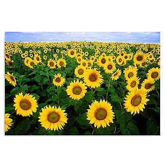 Deco Panel, Field of sunflowers