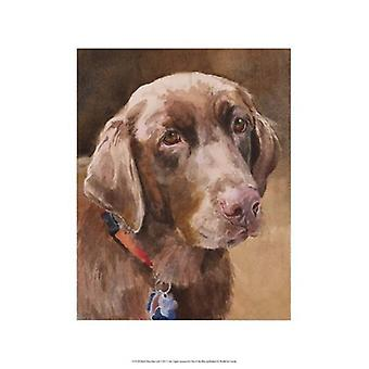 Bell Chocolate Lab Poster Print by Edie Fagan (13 x 19)