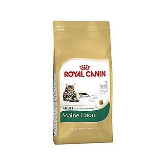 Royal Canin Cat Food Maine Coon 31 Dry Food