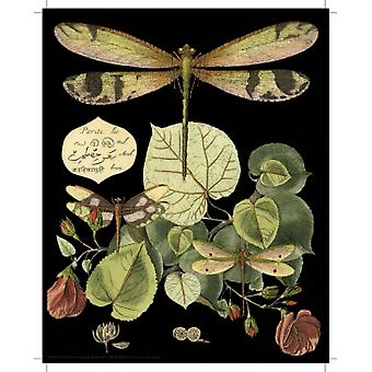 Whimsical Dragonflies on Black II Poster Print by Vision Studio (8 x 10)