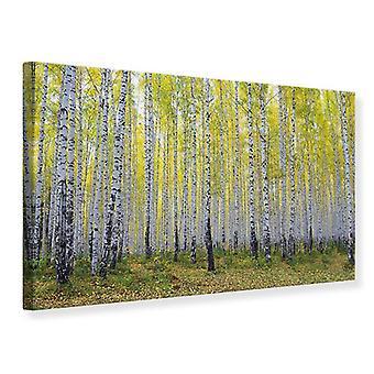 Lærred Print efterårsfarver Birk skov