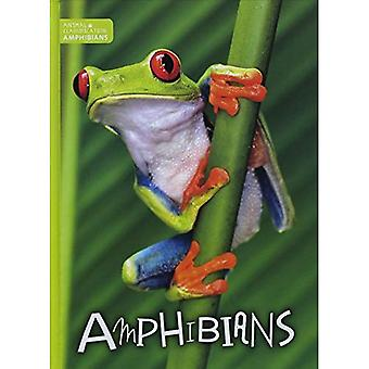 Amphibians (Animal Classification)