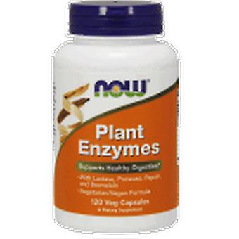 Now Plant Enzymes 120 Capsules