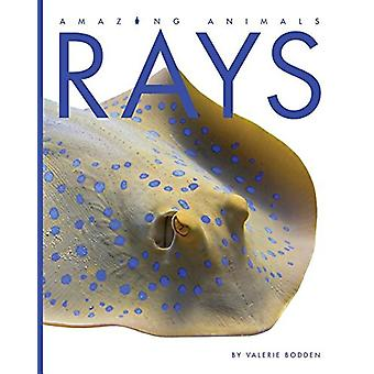 Rays by Valerie Bodden - 9781608188826 Book