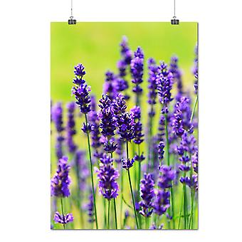 Matte or Glossy Poster with Levander Flower Nature Beautiful | Wellcoda | *q1215