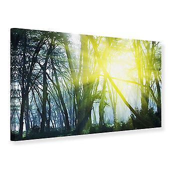 Leinwand drucken Sonnenstrahlen im Wald
