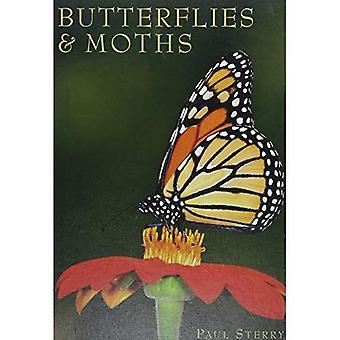 Butterflies & Moths (Exploring Nature)