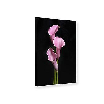 Canvas afdrukken 3 paarse Callas