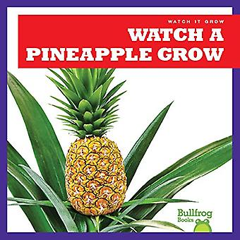 Regardez un ananas poussent
